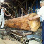 只今モミノ木の丸太を製材中です。